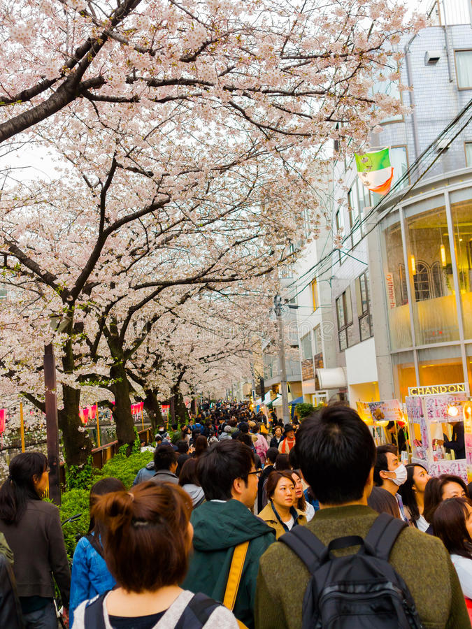 HAKONE, JAPAN - JULY 02, 2017: Unidentified people walking and enjoying the scenic view of beautiful cherry blossoms royalty free stock images