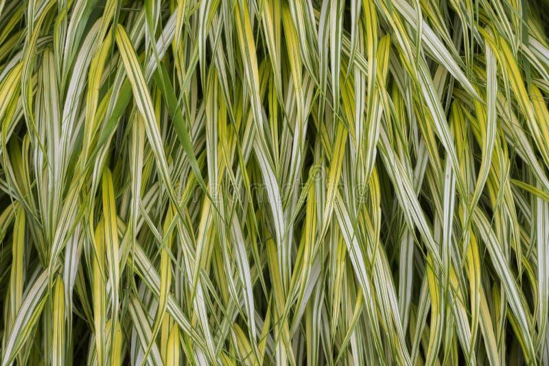 Download Hakone trawa zdjęcie stock. Obraz złożonej z yellow, tekstura - 41953020