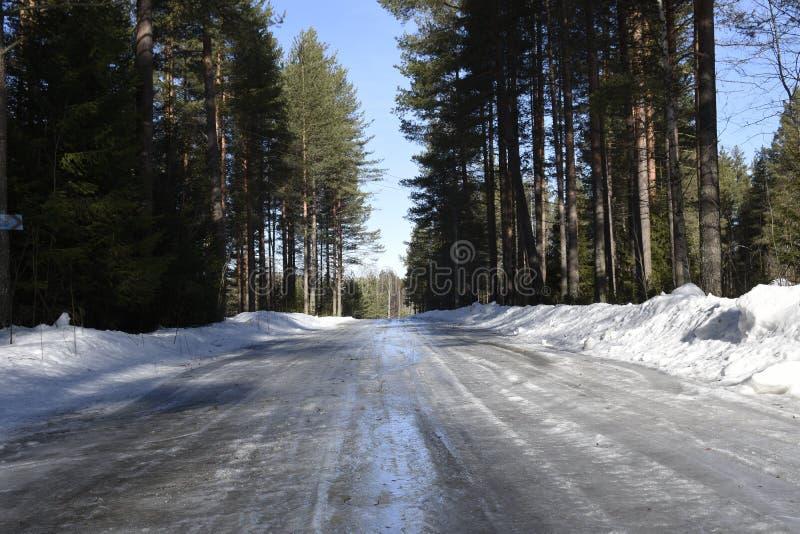Hal iskall väg till och med skogen med snö på båda sidor arkivfoto