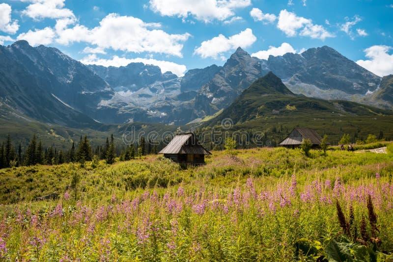 Hala Gasienicowa, montañas Zakopane Polonia de Tatra fotos de archivo libres de regalías