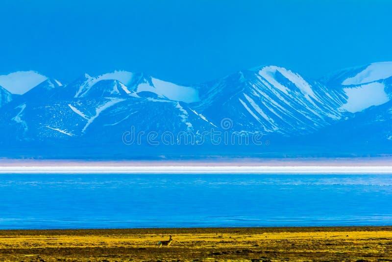Hala Lake e la neve hanno ricoperto la catena montuosa di Qilian, Qinghai-Tibet Platea, Cina fotografie stock libere da diritti
