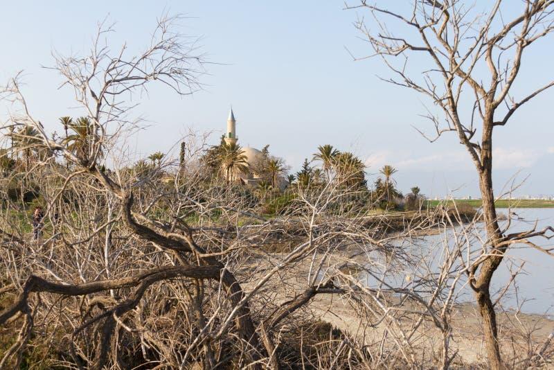 Hala Sultan Tekke bak trädfilialer, Larnaca salt-sjö i Cyp arkivbilder