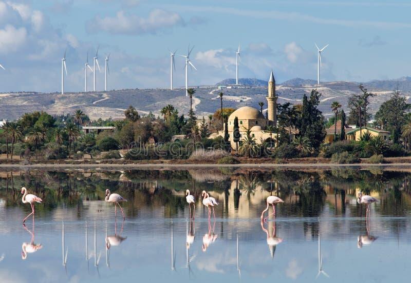 Hala Sultan Tekke en Chypre photographie stock libre de droits