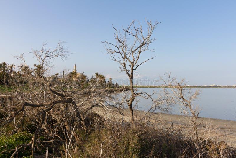 Hala Sultan Tekke och Larnaca salt-sjö bak trädfilialer, Cy fotografering för bildbyråer