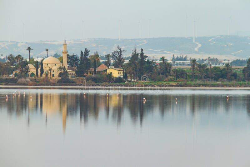 Hala Sultan Tekke på Larnaca salta sjöflamingo i förgrund royaltyfria foton