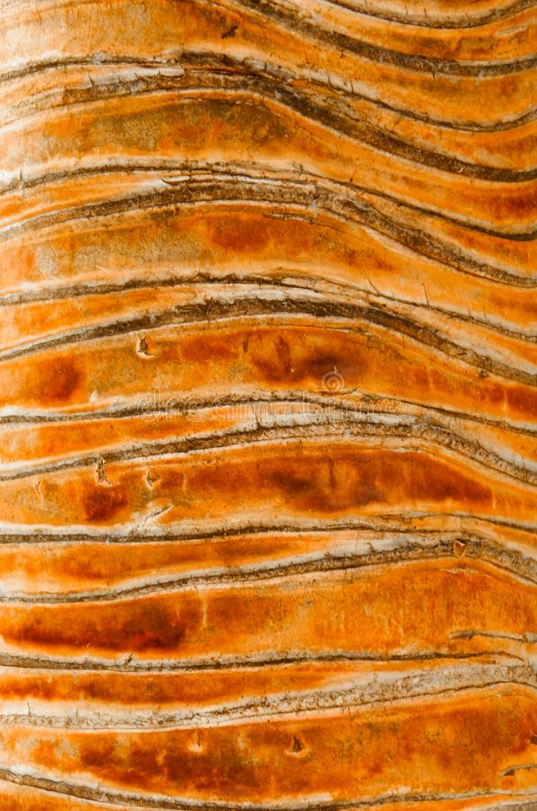Hala Tree Bark fotografia de stock