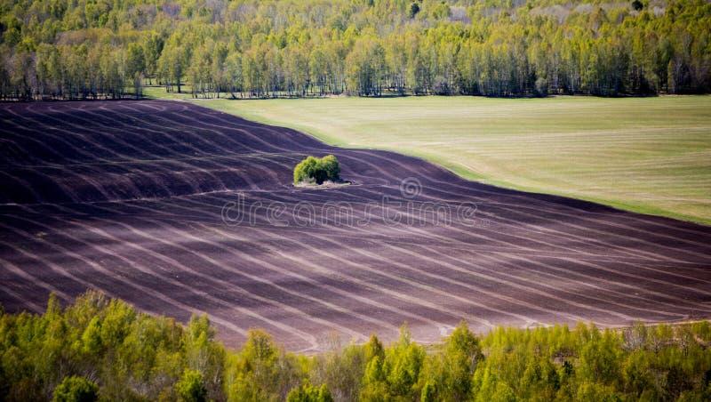 Halb-gepflogenes Feld umgeben durch Wald lizenzfreie stockfotografie