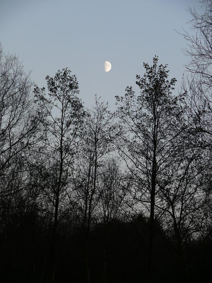 Halbmond über Bäumen lizenzfreie stockfotos