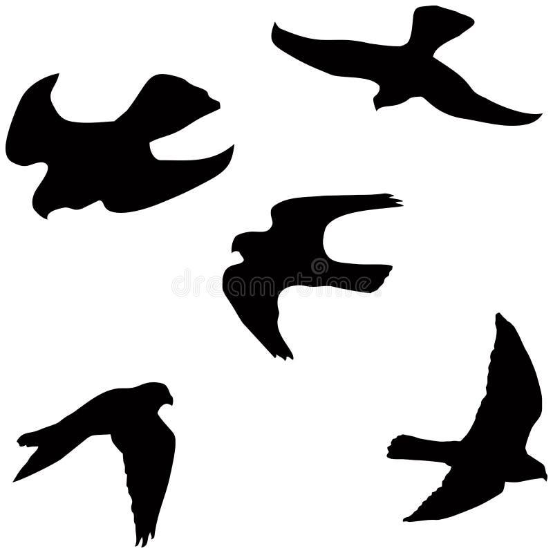 Halcón del vuelo libre illustration