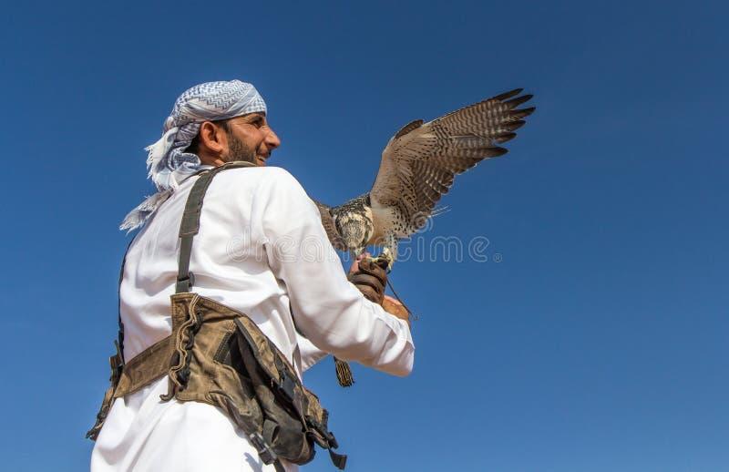 Halcón masculino del saker durante una demostración del vuelo de la cetrería en Dubai, UAE imágenes de archivo libres de regalías