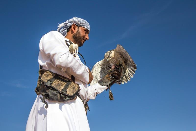 Halcón masculino del saker durante una demostración del vuelo de la cetrería en Dubai, UAE foto de archivo libre de regalías