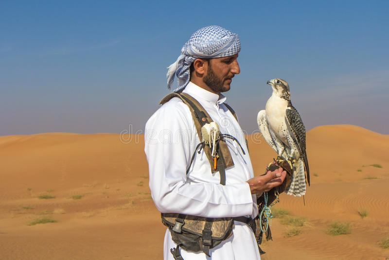 Halcón masculino del saker durante una demostración del vuelo de la cetrería en Dubai, UAE imagenes de archivo