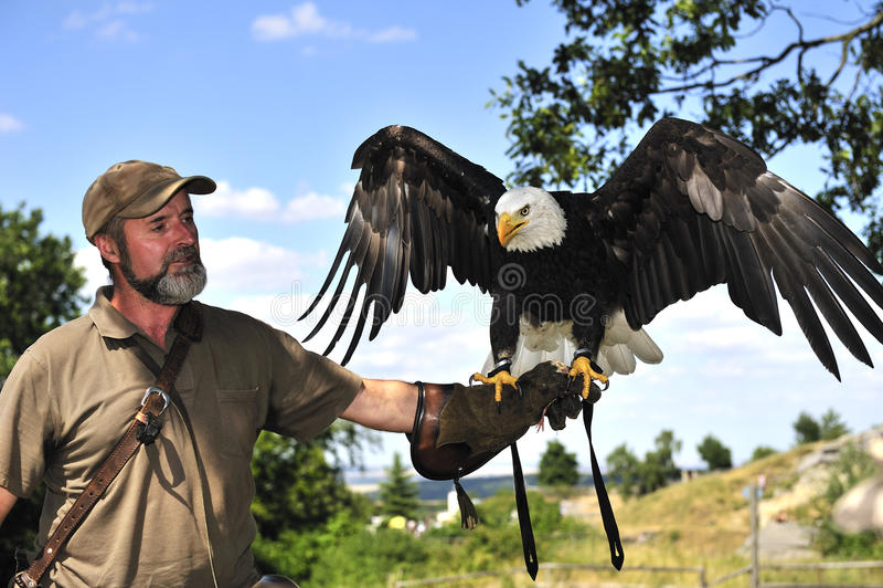 Halconero con el águila calva fotos de archivo libres de regalías