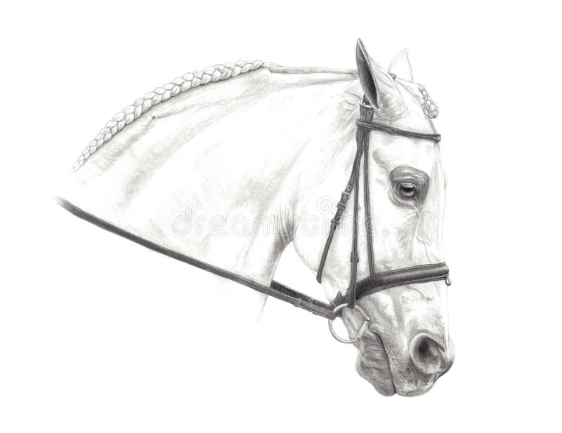 Download Half Arabian Pencil Drawing Stock Illustration - Illustration of drawing, bridle: 13671655
