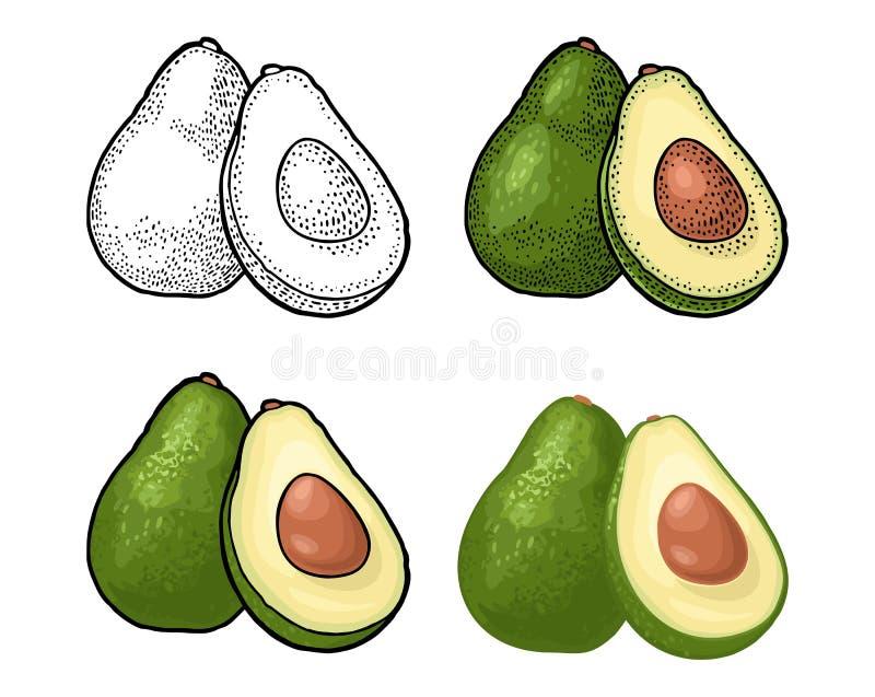 Half avocado with seed. Vector vintage engraving color. Whole and half avocado with seed and leaf. Vector color and black vintage engraving and flat illustration vector illustration