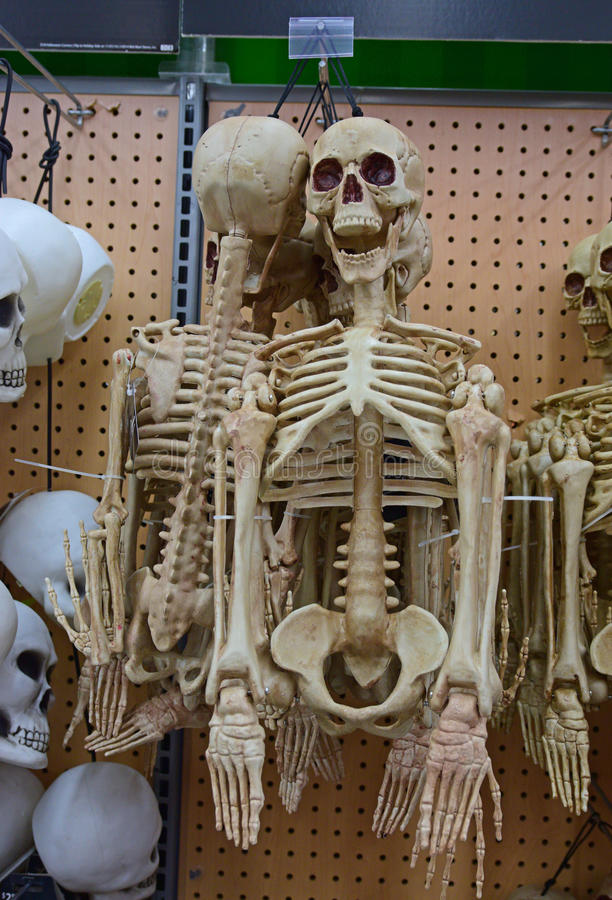 Half body human skeleton for Halloween. Merchandise of Half body human skeleton on sale for Halloween during the holiday season in North America royalty free stock photos