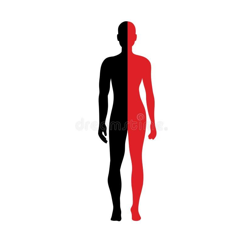 Half body Male and female Anatomy royalty free illustration