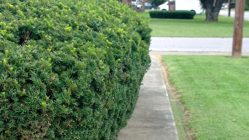 Half Bush stock afbeeldingen