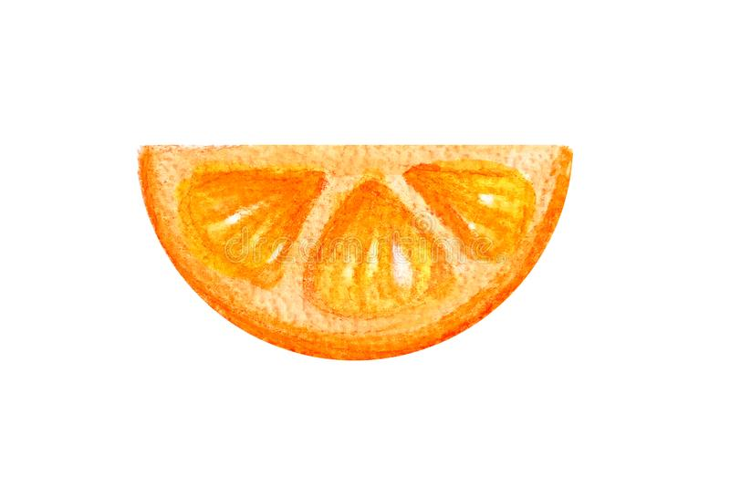 Half circle of a thin slice of juicy citrus orange in a watercolor style isolated on a white background.  vector illustration