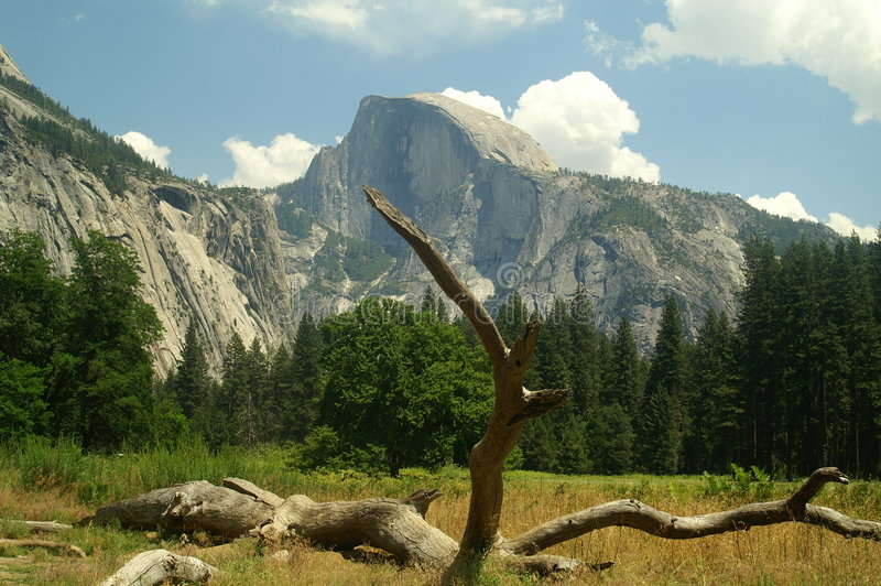 Half Dome from Meadow stock images