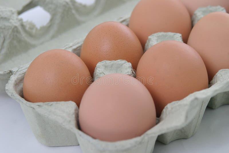 Half a dozen eggs. Half a dozen fresh eggs in a carton royalty free stock images