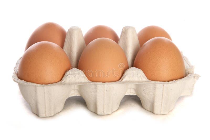 Half dozen fresh eggs cutout royalty free stock photography