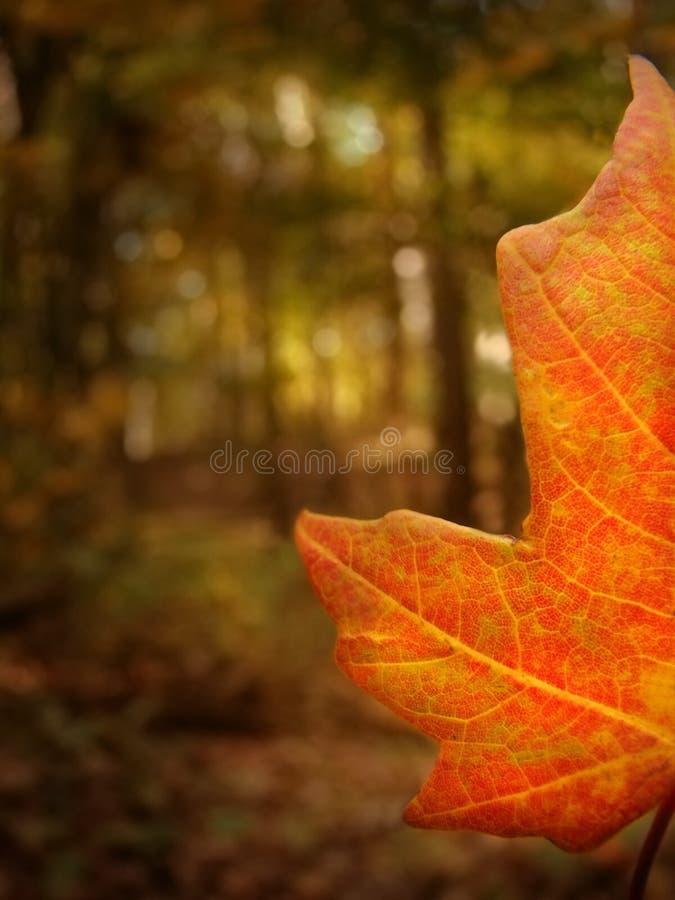 half fall royaltyfri fotografi