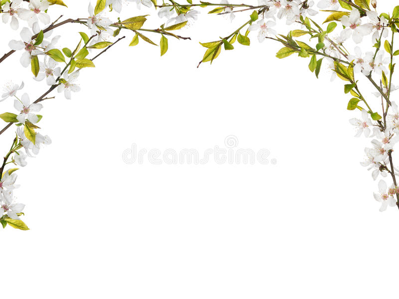 Half frame from flowers on spring tree branches stock images