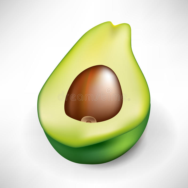 Half of fresh avocado fruit
