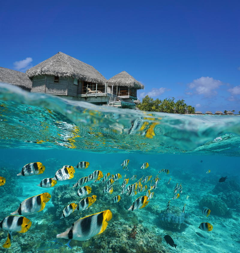 Half and half tropical bungalow and school of fish. Half and half, tropical bungalow over the water with a school of fish underwater, French Polynesia, Tikehau royalty free stock photo