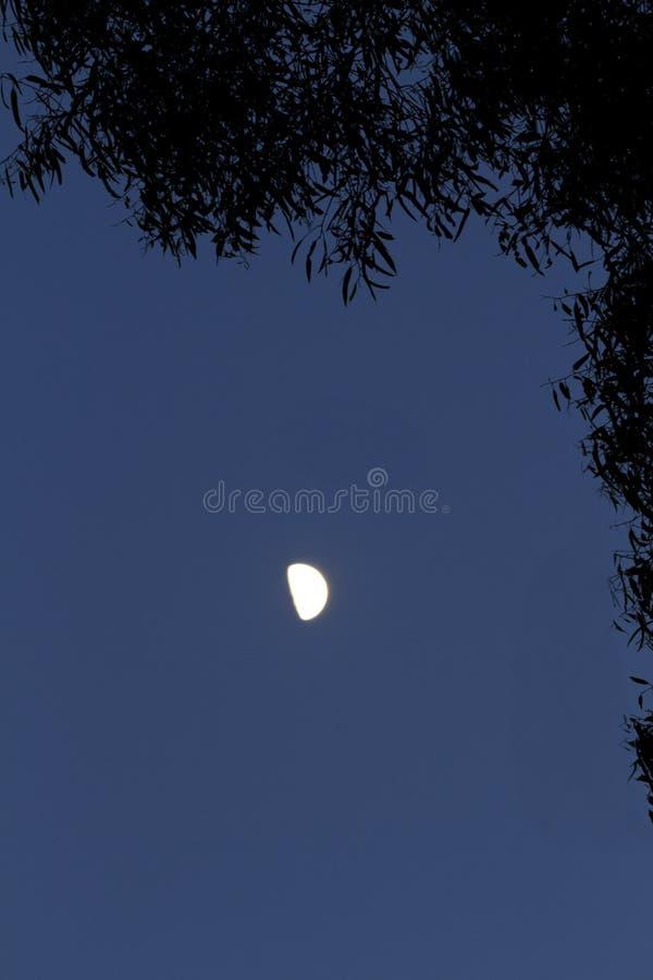 half lövrik moon för ram royaltyfria foton