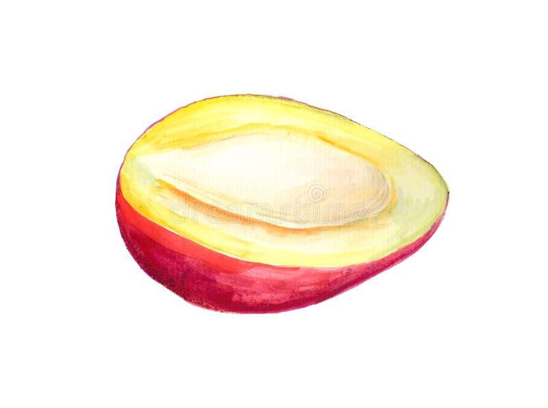 Half of mango. Watercolor image of half of red mango vector illustration