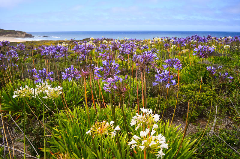 Half Moon Bay in Spring royalty free stock images
