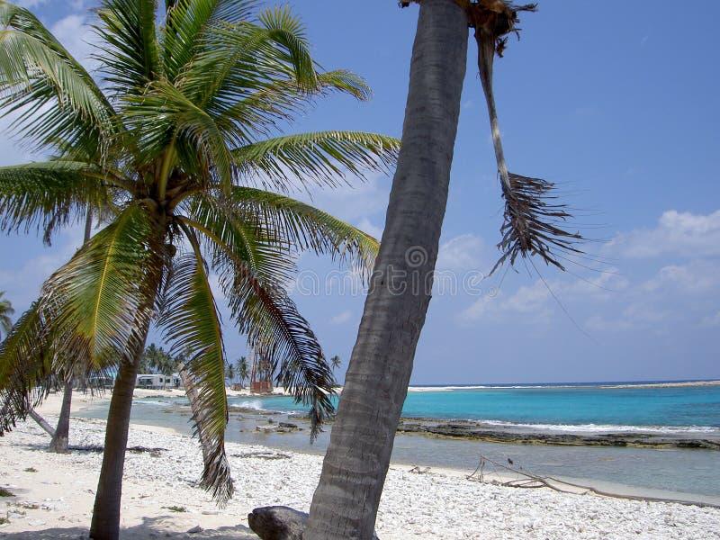 Half moon caye. Sandy beach & turquoise waters of half moon caye, belize stock photo