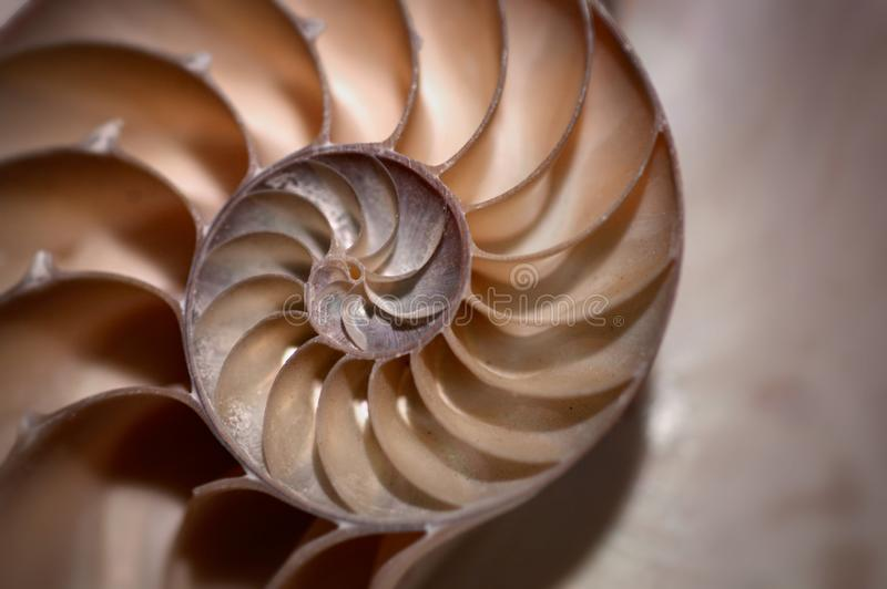 A half nautilus shell in brown and yellow sepia tones in soft focus. A half nautilus shell in brown and yellow sepia tones in soft in an abstract golden mean stock images