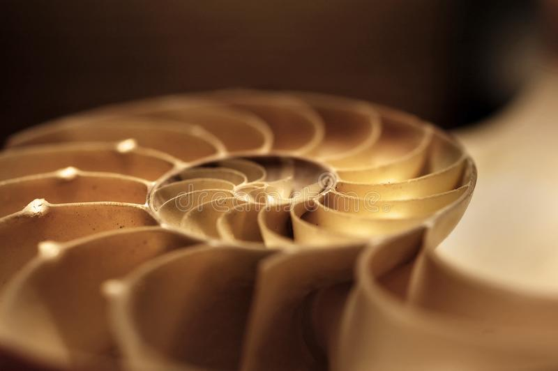 A half nautilus shell in soft focus. A half nautilus shell in brown and yellow sepia tones in soft focus stock image