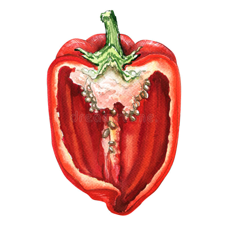 Free Half Of Red Sweet Bell Pepper, Watercolor Illustration On White Royalty Free Stock Images - 79562539