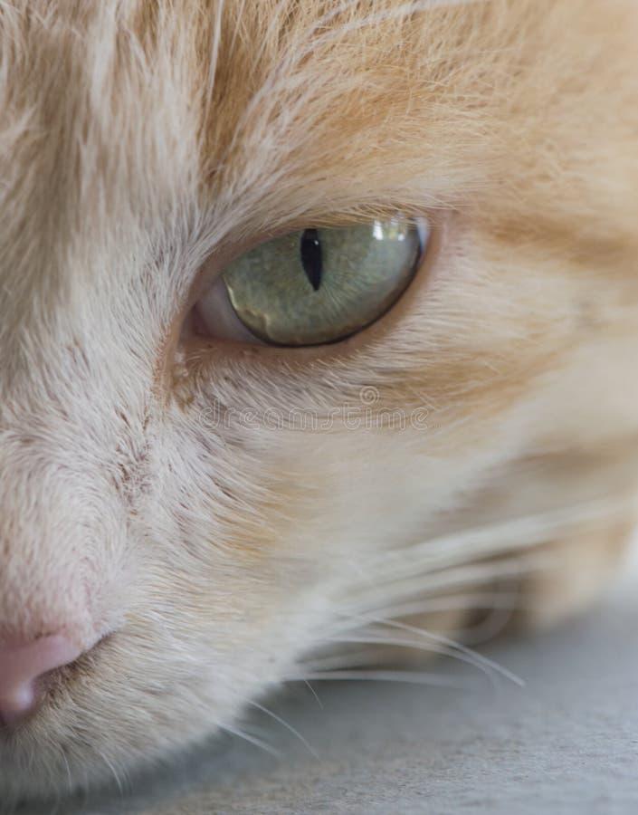 Half onder ogen gezien kat stock foto