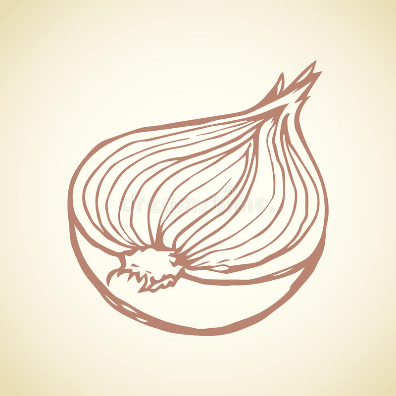 Half of onions. Vector drawing vector illustration