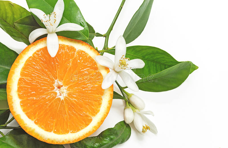 Half Orange Fruit with leaves and blossom isolated on white back royalty free stock photography