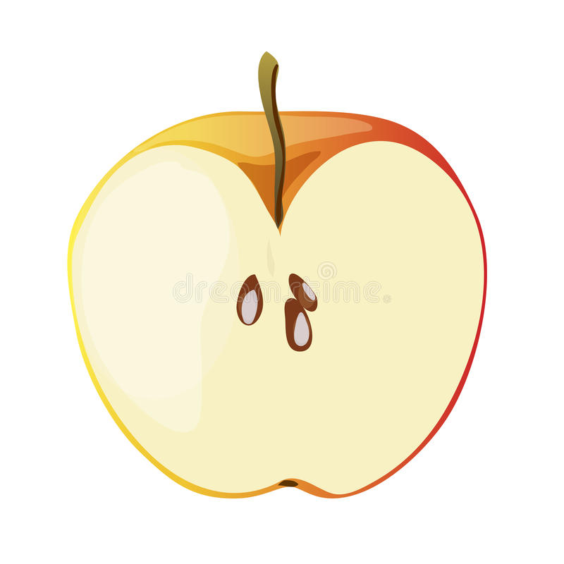 Half of red apple in a cartoon style. Vector illustration stock image