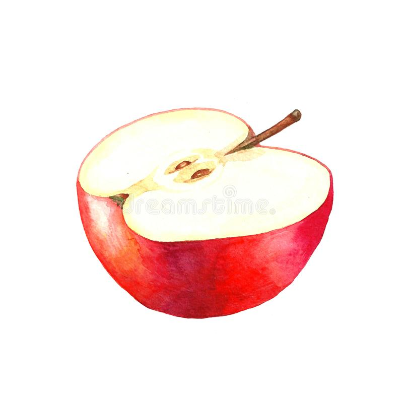 Watercolor illustration of half a red apple. royalty free illustration