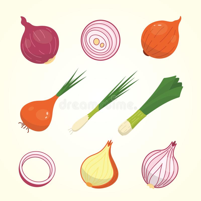 Half, slice and whole onion ripe. Yellow, red and spring onions vegetable vector set in cartoon style. vector illustration