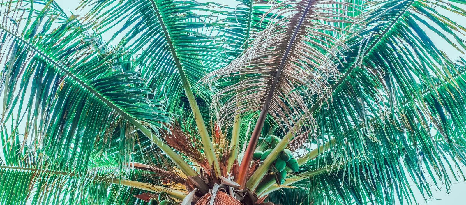 Half of the top of a palm tree royalty free stock photo