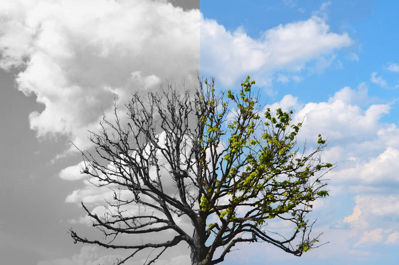 Half tree is alive with leaves, another half is dead royalty free stock image
