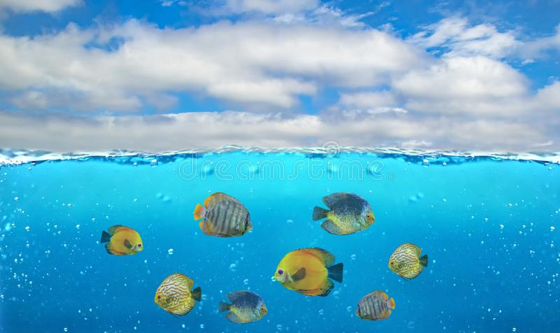 Half underwater photo of tropical paradise with a group of colorful fishes. T royalty free stock photos