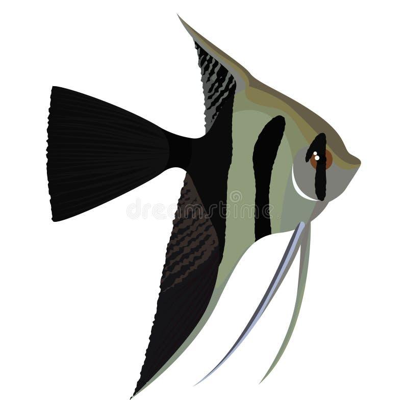 Halfback przesłony angelfish kreskówki akwarium ryba royalty ilustracja