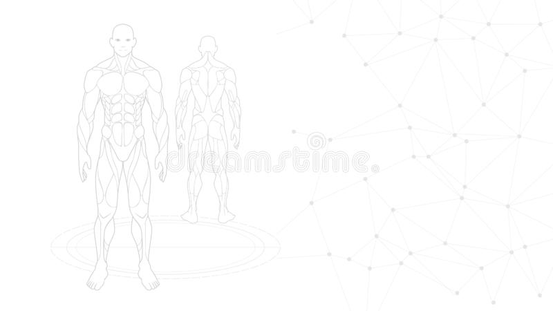 Halftone grijs-witte behangachtergrond van de het menselijke lichaamsanatomie van de contourvorm het neonhologram dat bij witte a stock illustratie