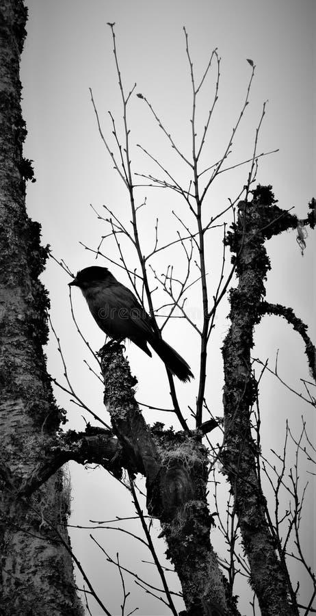 halftone Vogel op Boom stock fotografie