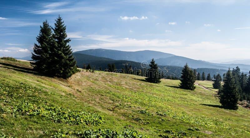 Hali Rysianka halna łąka w Beskid Zywiecki górach w Polska zdjęcia royalty free